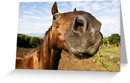 Inquisitive horse by mrfotos