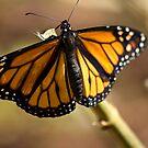 Wings of Beauty by Donna Adamski