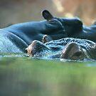 Hippo Pair by Vicki Hudson