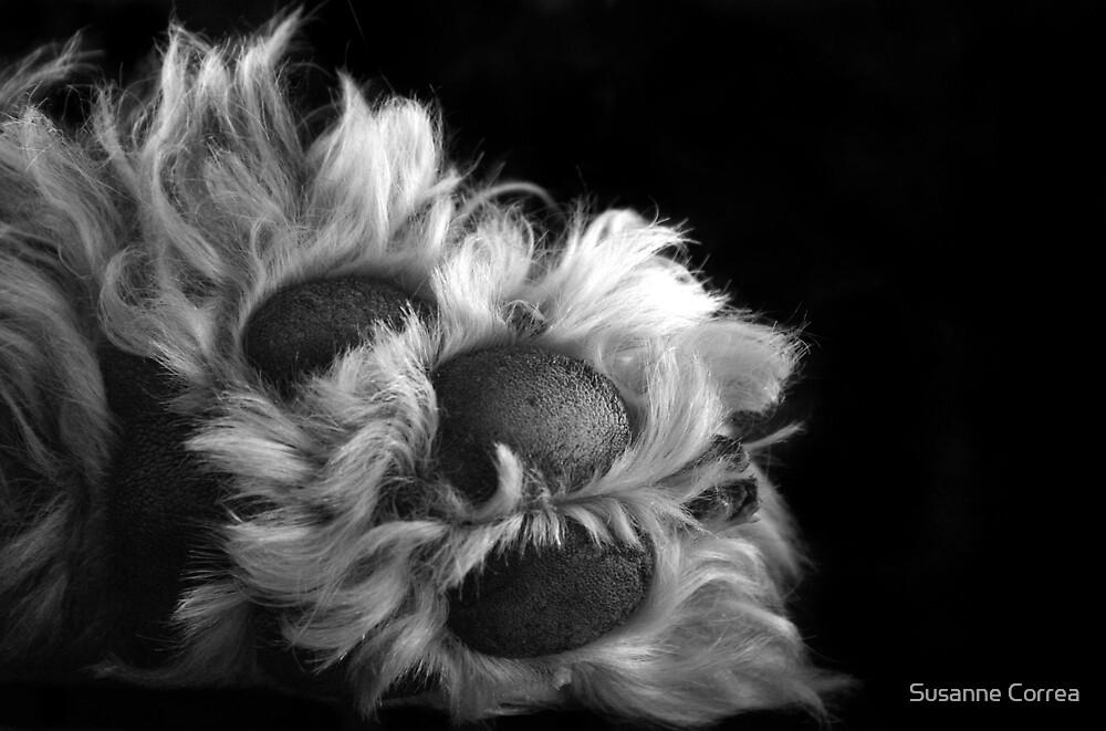paw by Susanne Correa