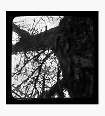 Rapunzels Tree Ttv Photographic Print
