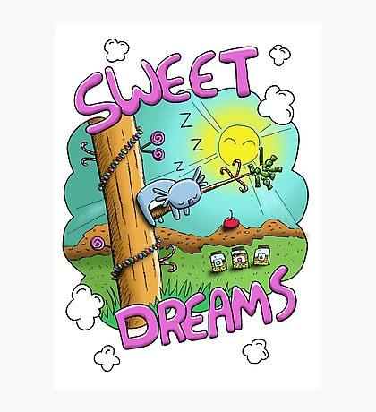 Sweet Dreams - Cute Sleeping Koala Photographic Print
