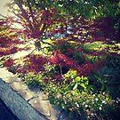 Nihongi Maple by BrookeNilsson