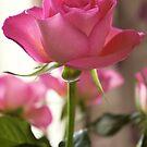 In the pink by Steve plowman