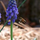First Bee by Lolabud