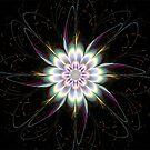 Spiral Flower by Barbara A Lane