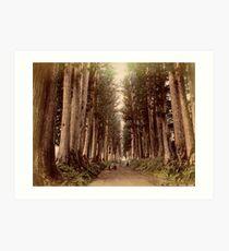 Imaichi Nikko Road, Japan Art Print