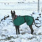 Winter by Cheryl Davies