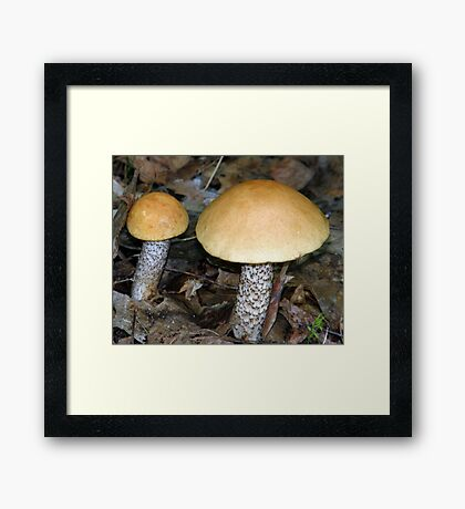Shroompair Framed Print