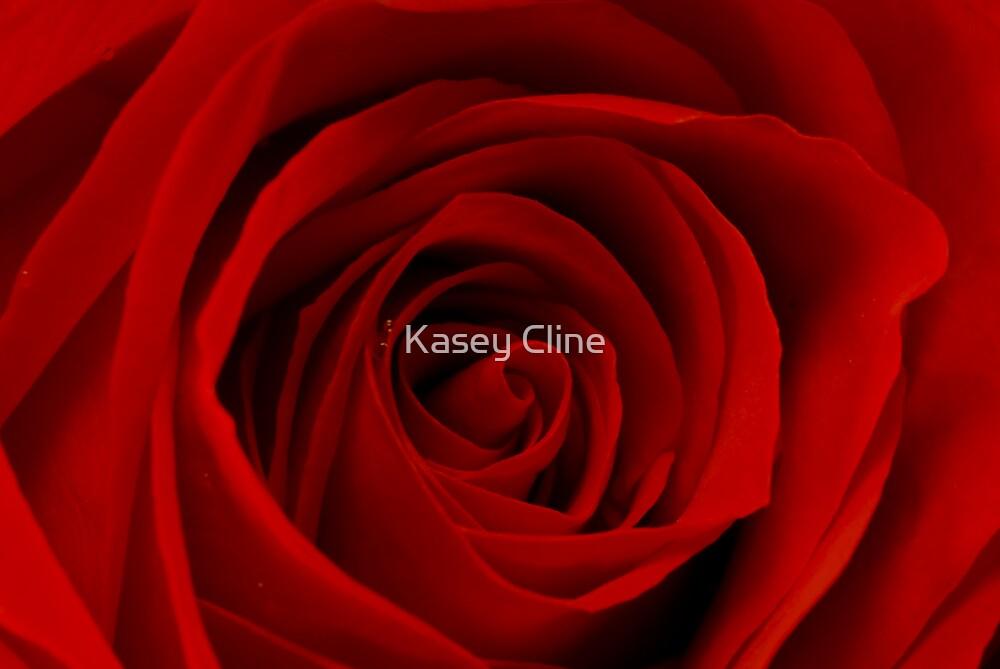 True Love by Kasey Cline