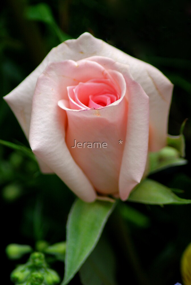 for the LADIES by Jerame    *