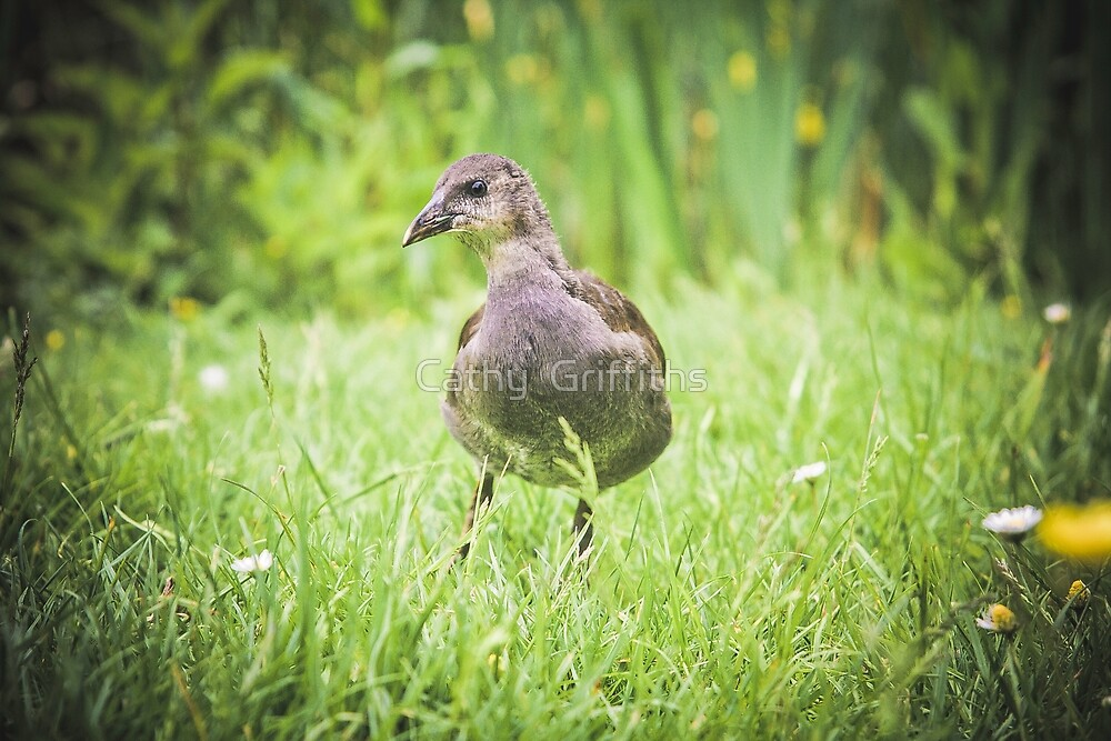 A Little Moorhen In Spring by Cathy Griffiths