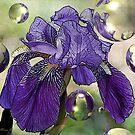 Purple Elegance by Pat Moore