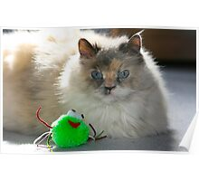 This toy does not amuse me..... Poster
