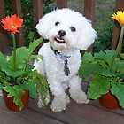 Georgie loves flowers by Darlene Virgin