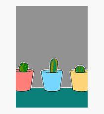Three Little Cactus Photographic Print
