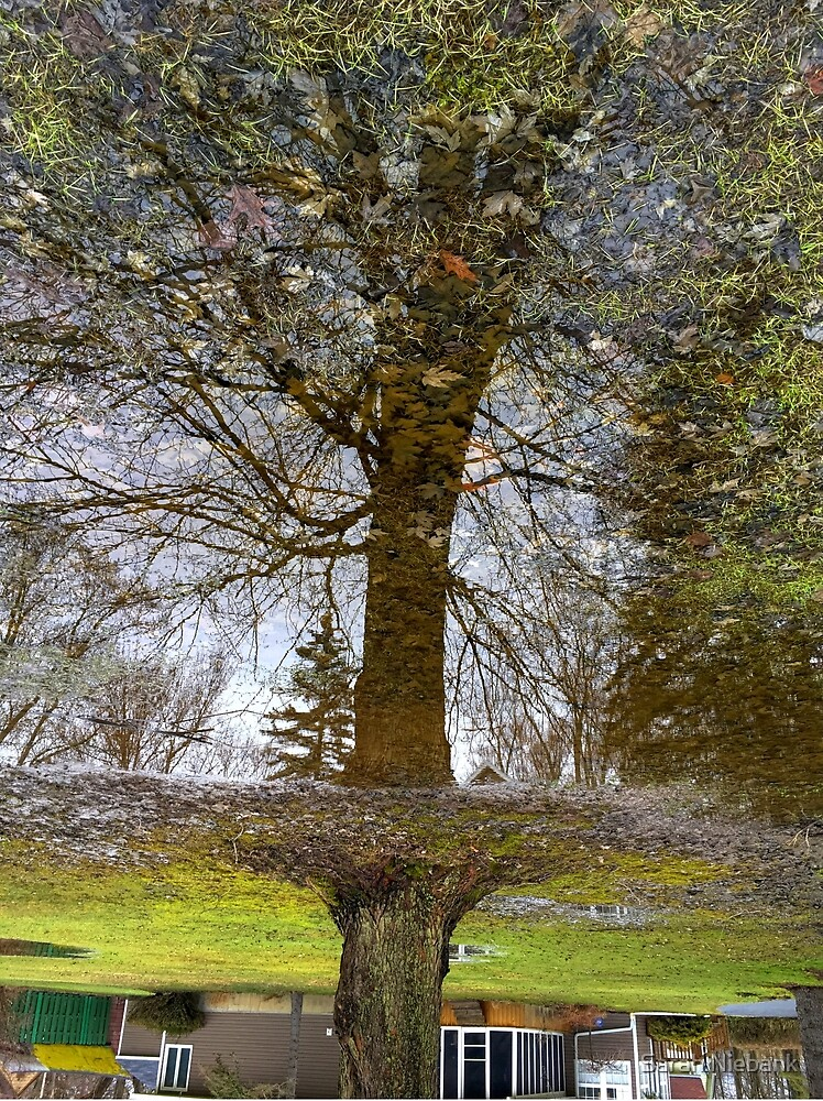 Tree in a puddle of Melting Winter #2 by Sarah Niebank
