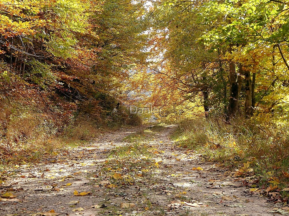 Forest stone path by Danler