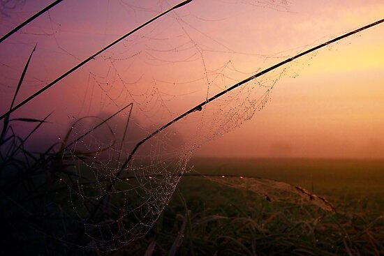 Cobwebs in fog and sunrise  by lindaully