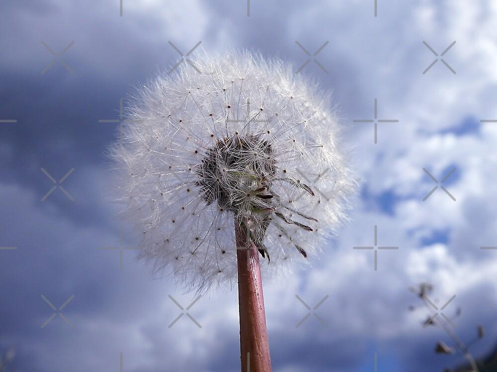 dandelion by Danler