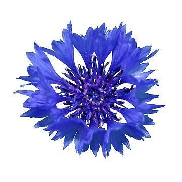 cornflower by Flamango-wear