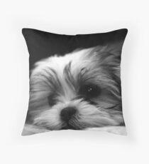Shitzu/Maltese Mix Puppy Throw Pillow
