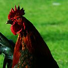 rooster on a spring day by Victor Jimenez