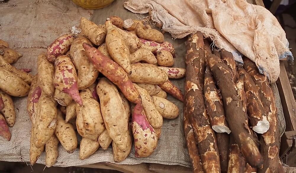Cassava by zhirobas
