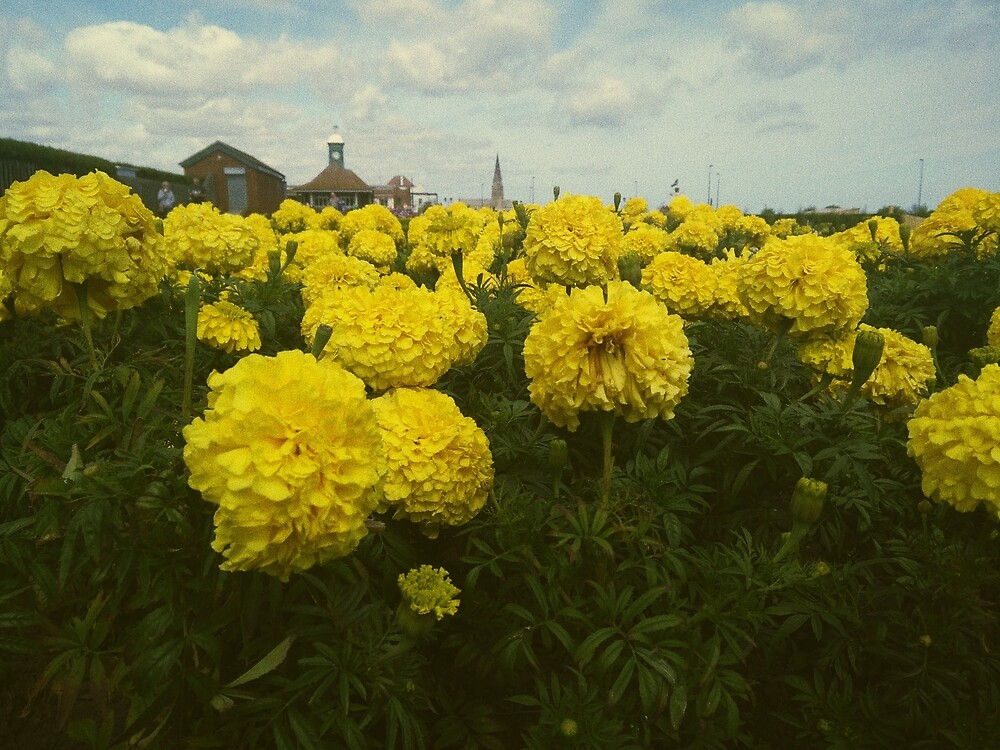 Flowers in the Boatyard by aliencalling