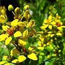 Yellow Flowers  by Amanda Diedrick