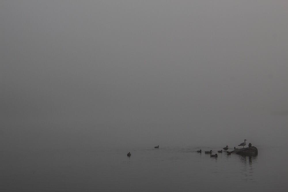 Mystic birds disappear in fog by rcrdlndn