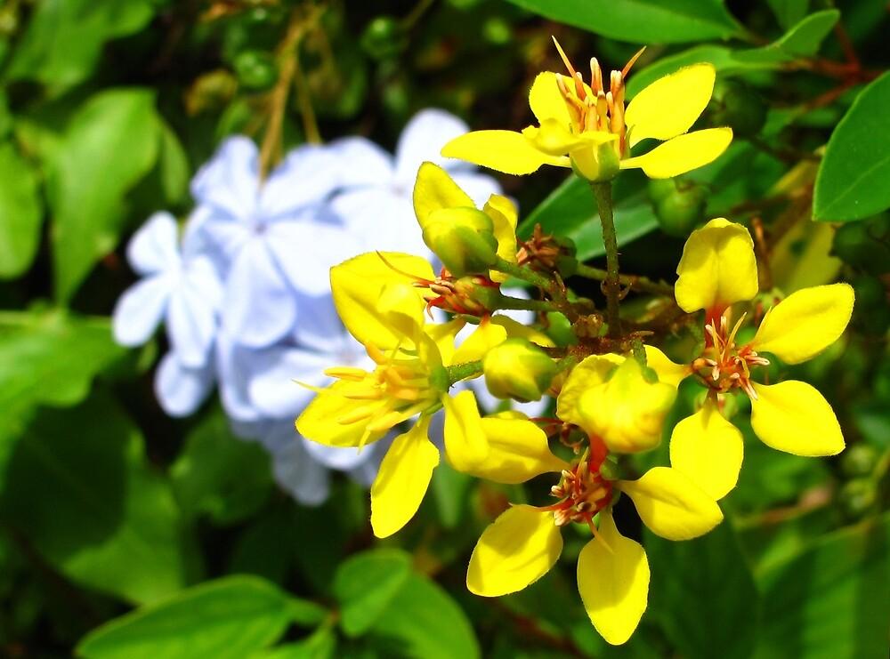 Yellow Flowers II by Amanda Diedrick