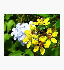 Yellow Flowers II Photographic Print