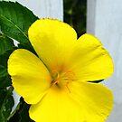 Yellow Flower  by Amanda Diedrick