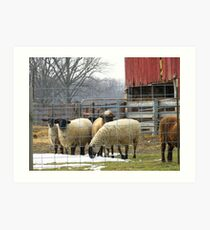 No. 3 Sheep on the Farm Art Print