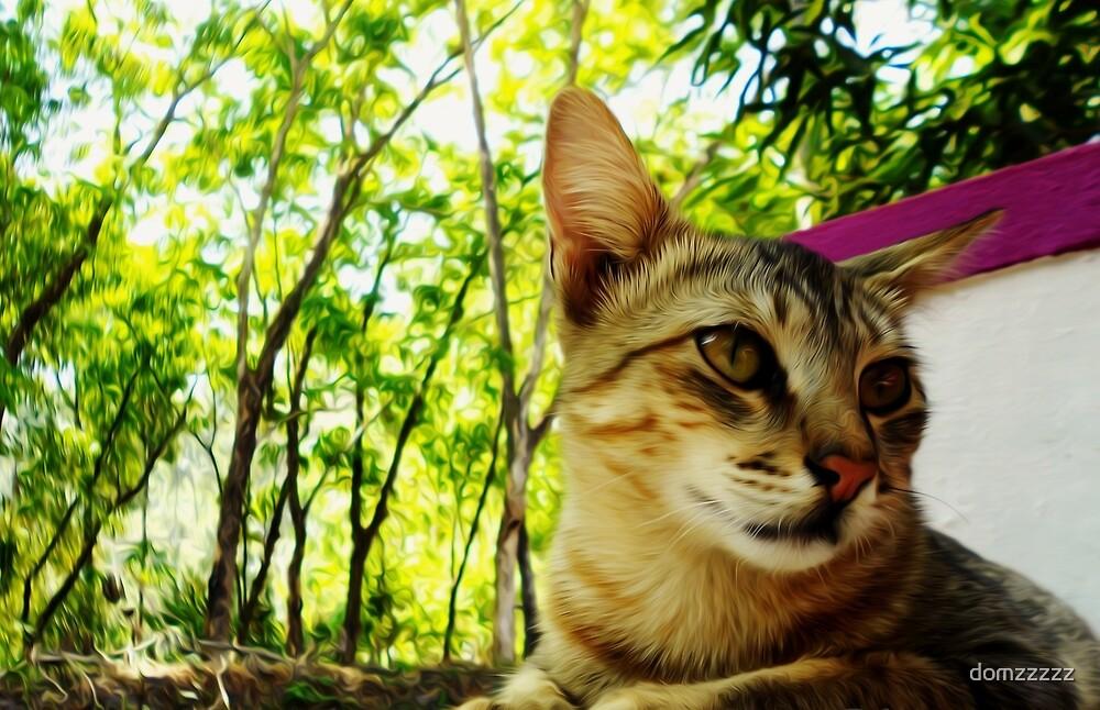 Tiger Cat by domzzzzz
