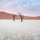 Dawn in DeadVlei (Panorama) by Mieke Boynton