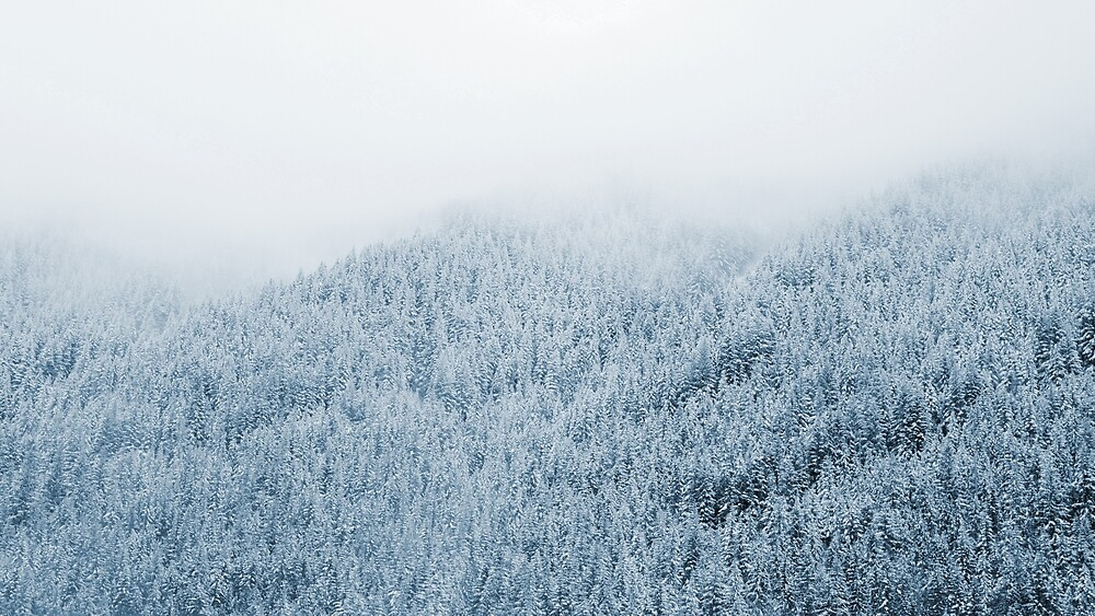 snowfall by Grant Lechner
