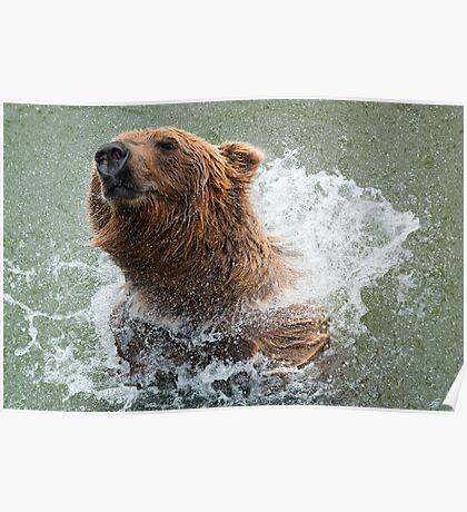 Bathing Bear Poster