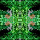 Deer Dreams 3642  by Candy Paull