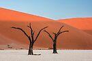 Dune Light by Mieke Boynton