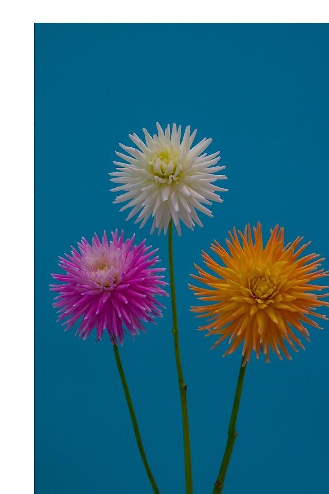 3 cute little flowers by KerriMelehan