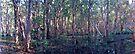 Paper Bark Swamp - Mackay North - Queensland by Paul Gilbert