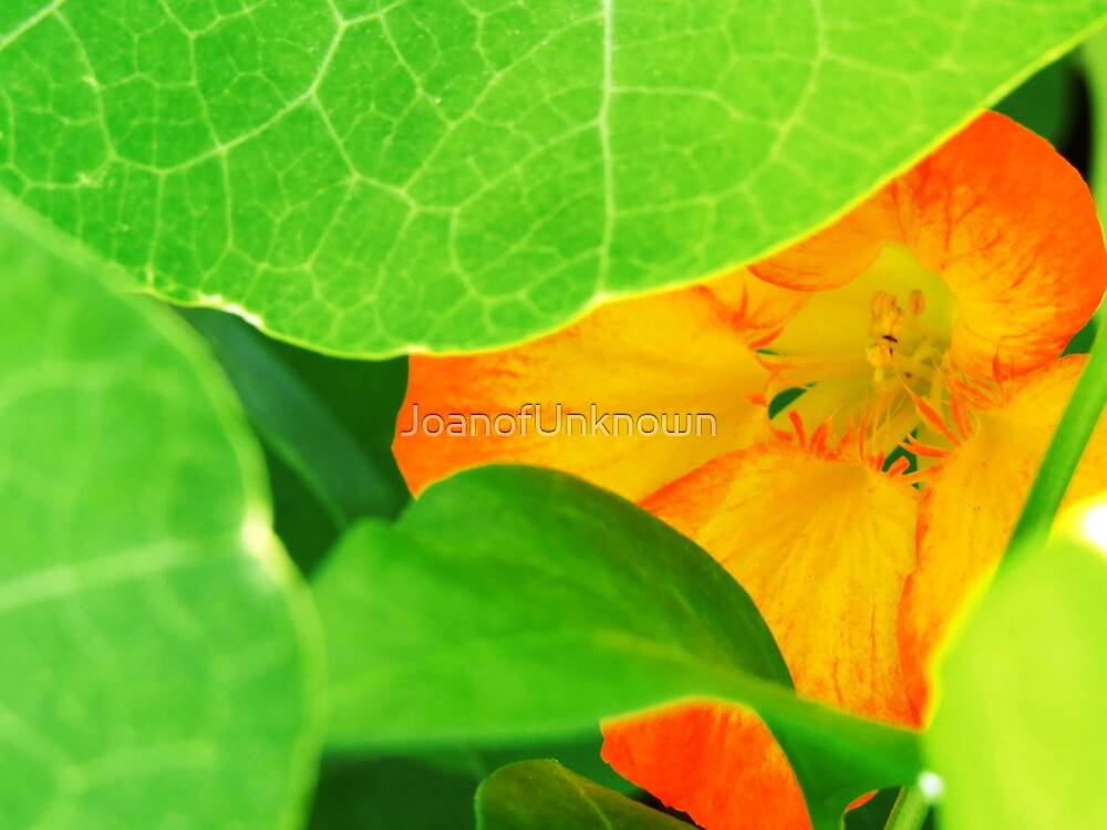 Hidden Flora by JoanofUnknown