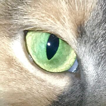 Cat's Eye by NWooldridge