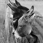 3 Donkeys by sienebrowne