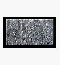 Beautiful winter landscape with snow covered trees Photographic Print