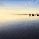 Into the Sunset by Mieke Boynton