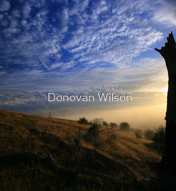 The Black stump by Donovan Wilson