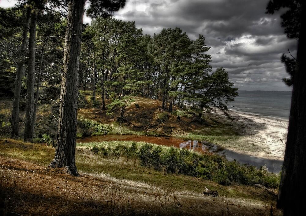 The Pines shoreham beach by Daryl Gordon